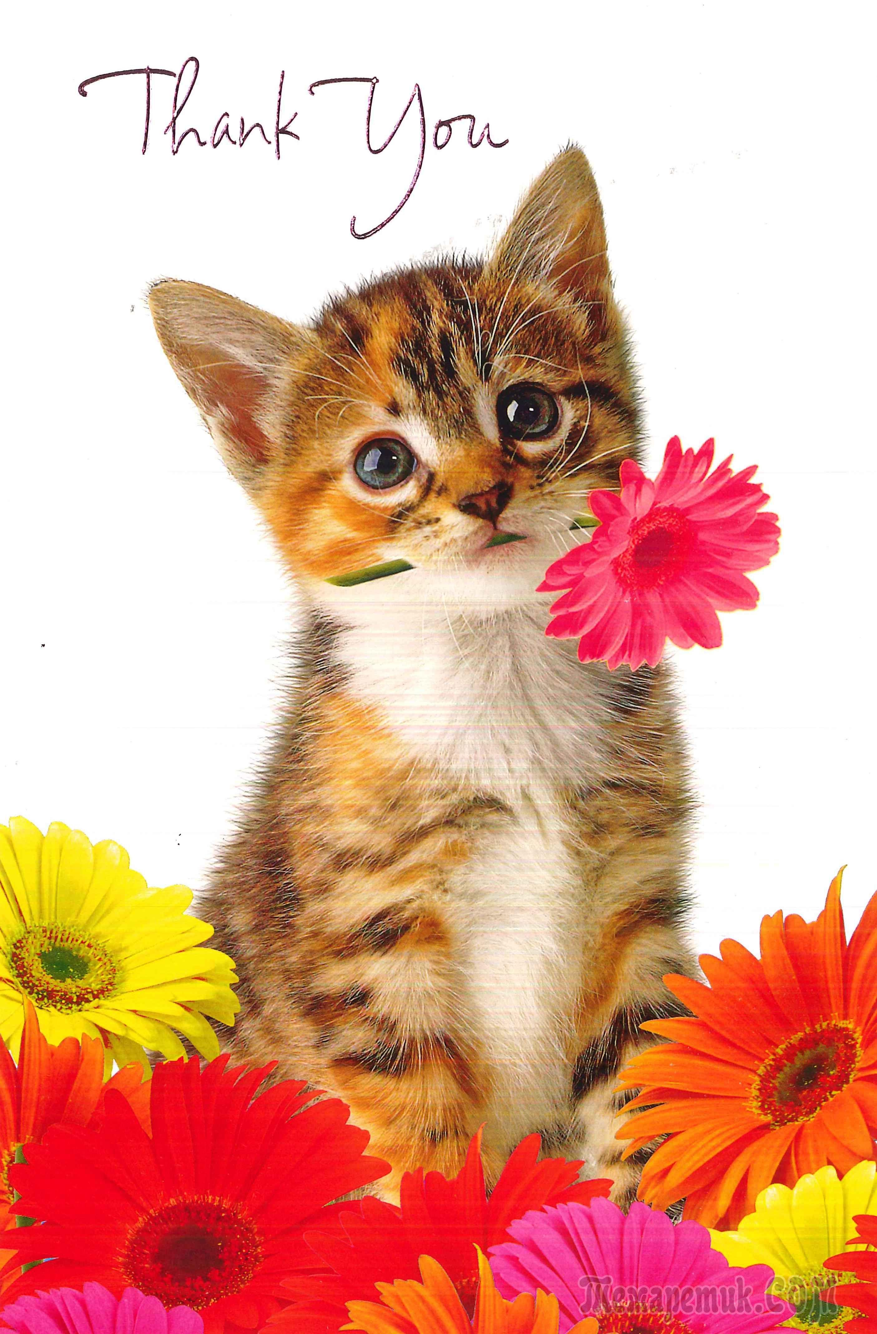 Днем рождения, картинки спасибо с котиками