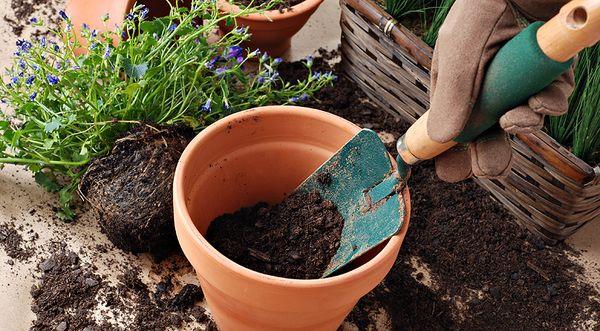 Время от времени нужно менять землю в цветочном вазоне