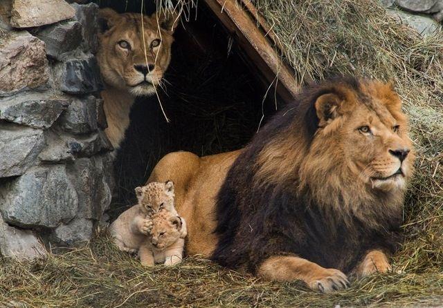 семейные портреты животных, семьи животных фото, фотогеничные животные