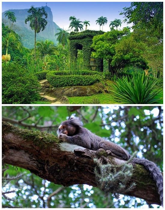 Гостей природного оазиса зачастую развлекают пушистые обитатели (Ботанический сад в Рио де Жанейро, Бразилия). | Фото: rutraveller.ru.