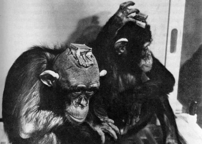 Безумный эксперимент: контроль разума животных.