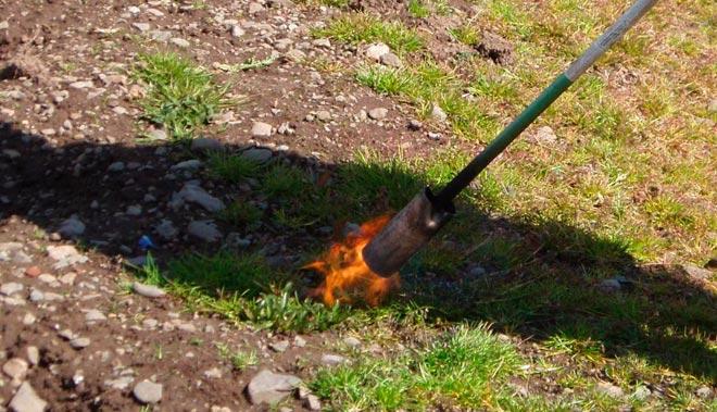 обработка огнем от сорняков