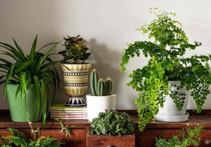Убедитесь, что цветы находятся как можно дальше от предметов или мест, способных менять температуру / Фото: luxury-house.org