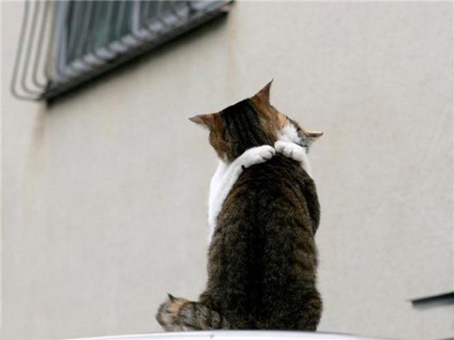 Кот и кошка обнимаются. Фото