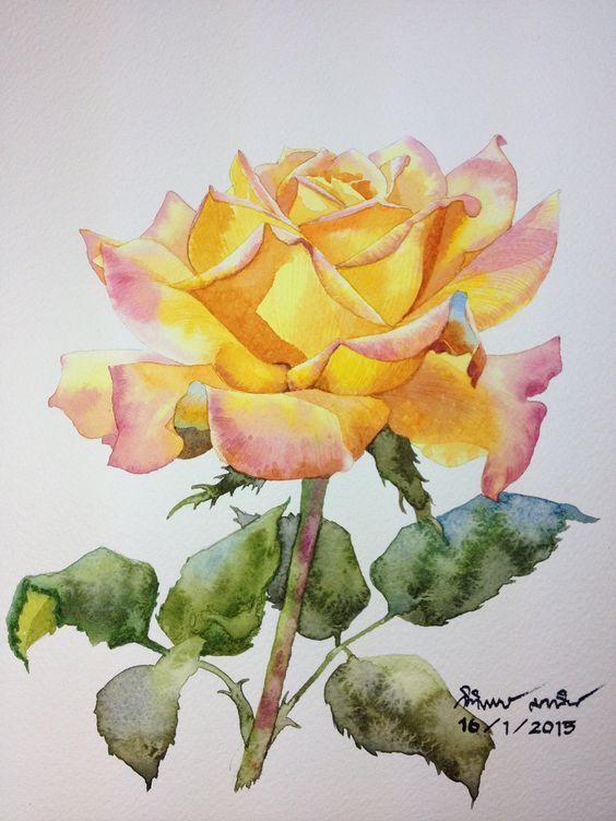 Yellow rose: