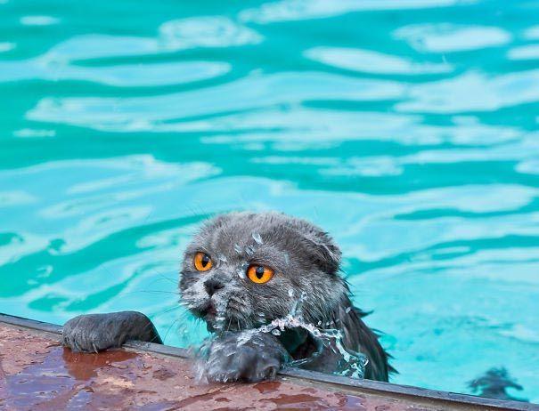 коты любят воду, коты купаются, коты вода