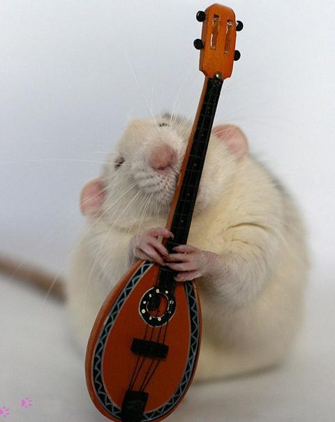 Крыса играет на домбре. Эллен ван Дилен. Фото