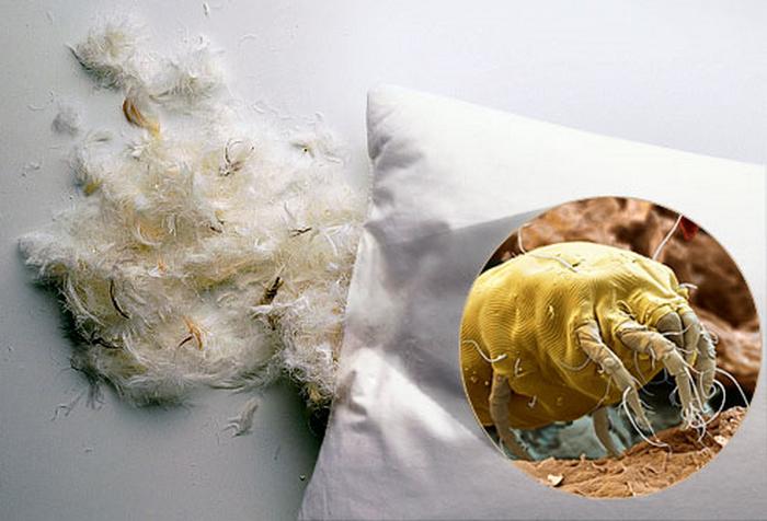 Подушка - рай для бактерий.