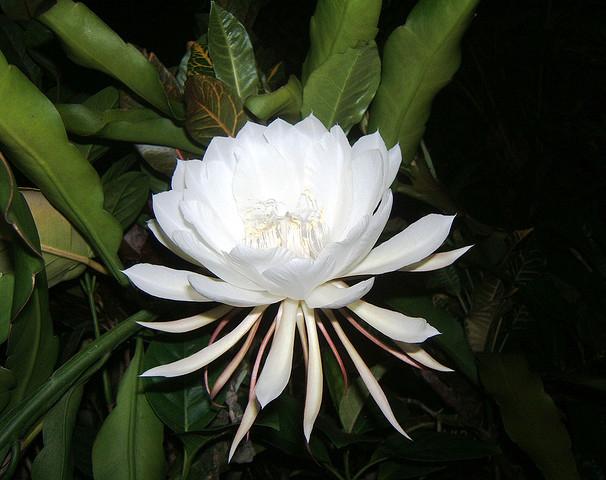 Фото самые дорогие цветы в мире