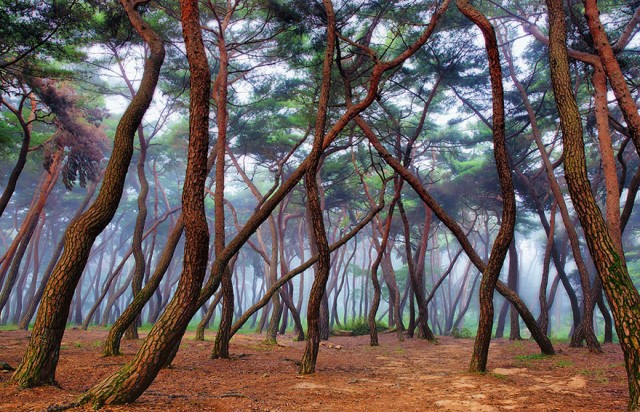 Мистические леса, которые вам захочется увидеть своими глазами лес, мистика, фото