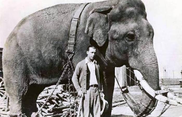 Безумный эксперимент: слон на «кислоте».