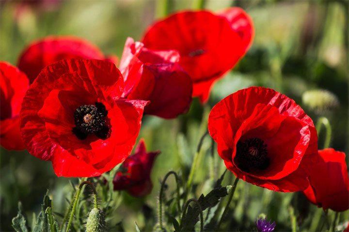 10 самых красивых цветков