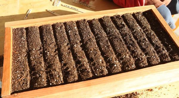 Деревянные ящики для рассады отлично пропускают воздух к корням