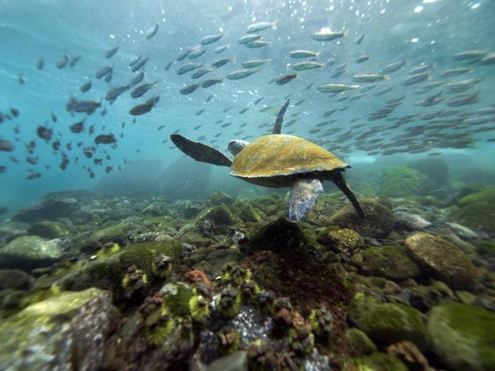 Галапагосские острова, Эквадор