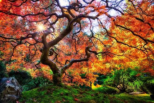 Самые старинные красивые деревья