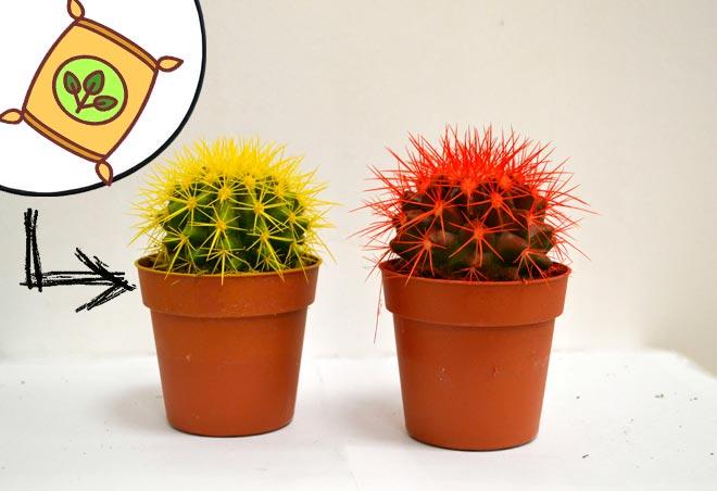 подкормка желтого кактуса