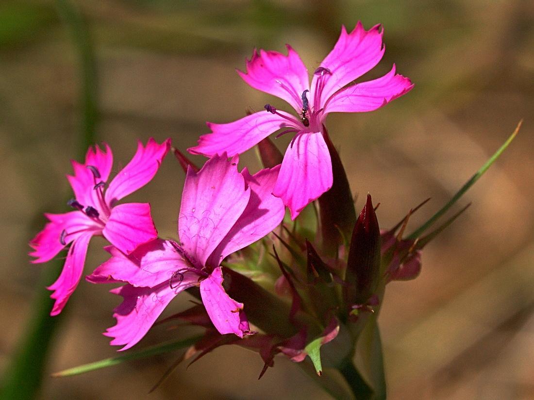 Ценник на цветы картинка гвоздика продолжить морскую