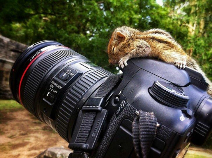 Фотографии животных, которые спят там, где захотят 7