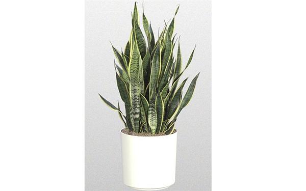 Самые полезные комнатные растения: