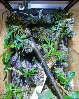 Орхидариум