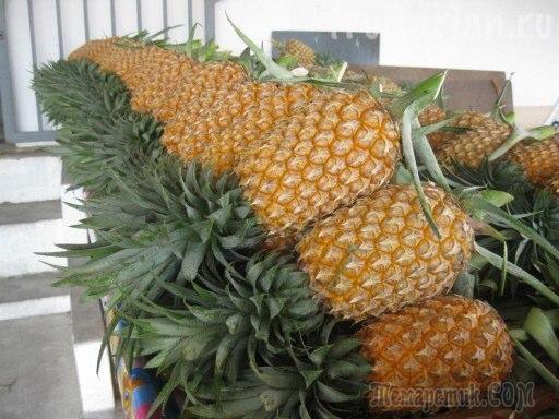 Где растет ананас