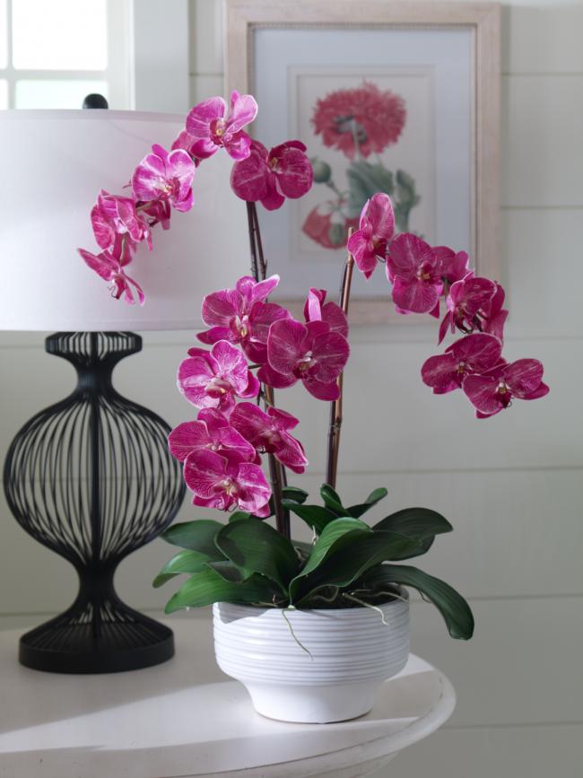 Нежная розовая орхидея в белом горшочке