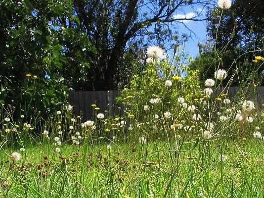 трава и сорняки