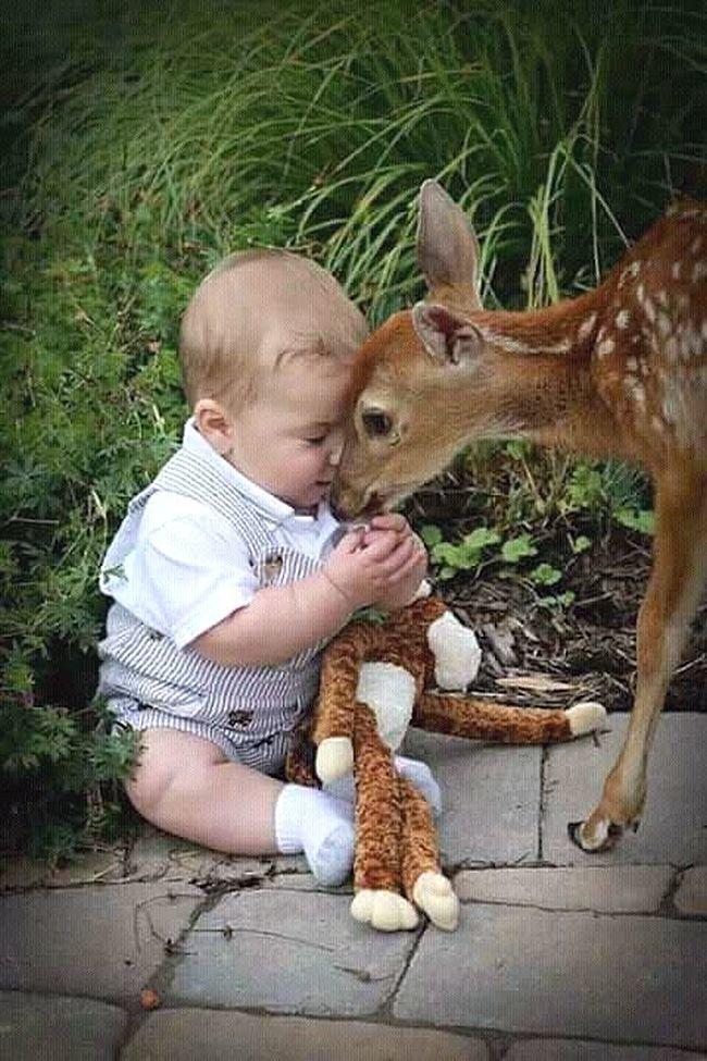 Картинки животных и детей с комментариями