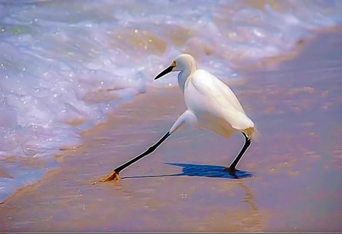 Птица пробует водичку.