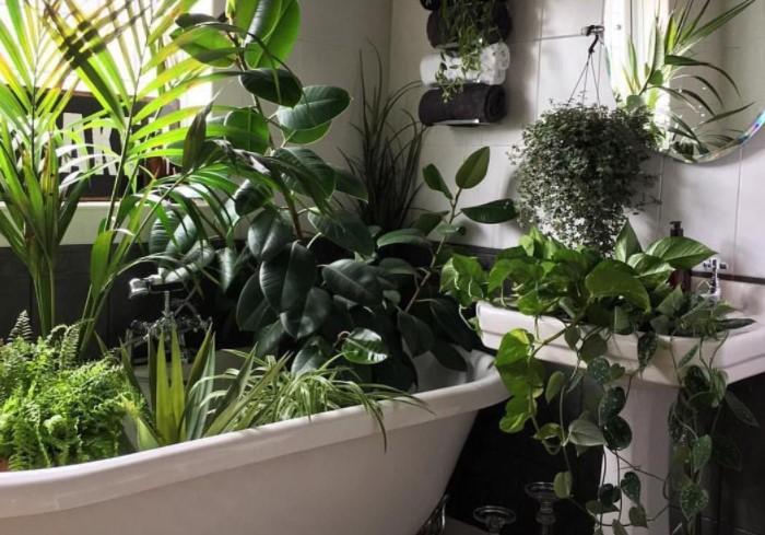 Поместите растения в резервуар для воды, чтобы одновременно позаботиться о нескольких цветах / Фото: na-dache.pro