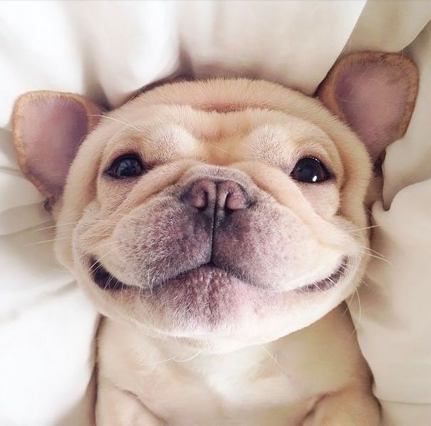 Улыбайки от собак! животные, милота, приколы, улыбка