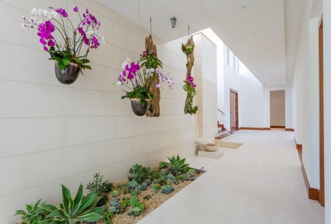 Подвесные кашпо с орхидеями на открытом воздухе – безвредны