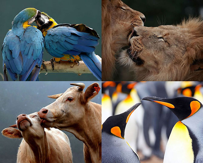 Пары в мире животных