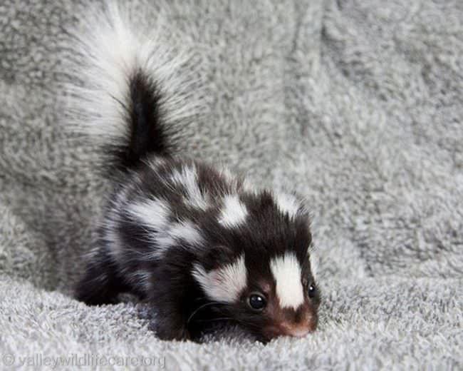 милые детеныши животных, малыши животные, детеныши животных фото
