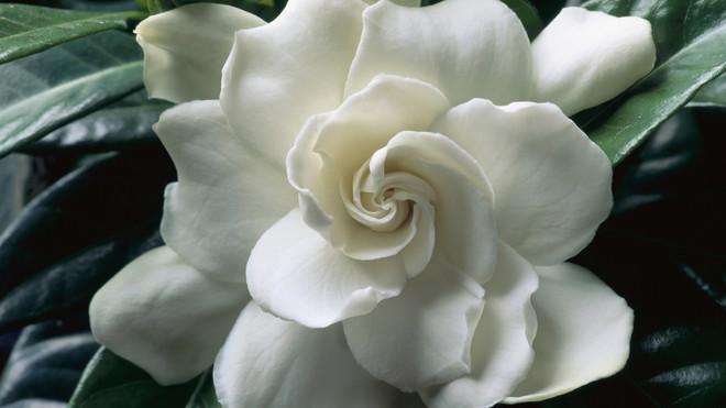 Ароматерапия: запахи, которые взбодрят, успокоят и подарят радость (фото 20)