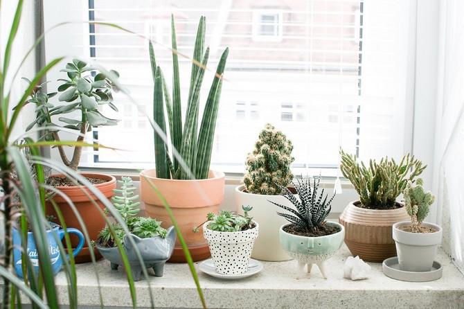 Лунный календарь для комнатных растений и цветов в феврале