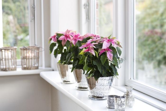 Небольшие цветочные горшки с комнатными растениями, которые будут отлично смотреться на подоконнике в любой комнате.