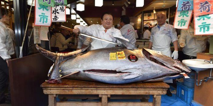 Большая рыба опасна. /Фото: 123ru.net.