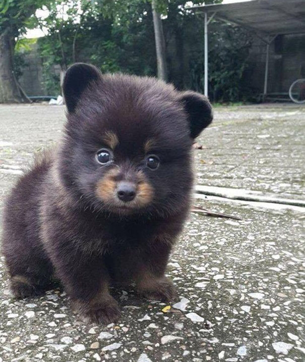 милые щенки, очаровательные щенки