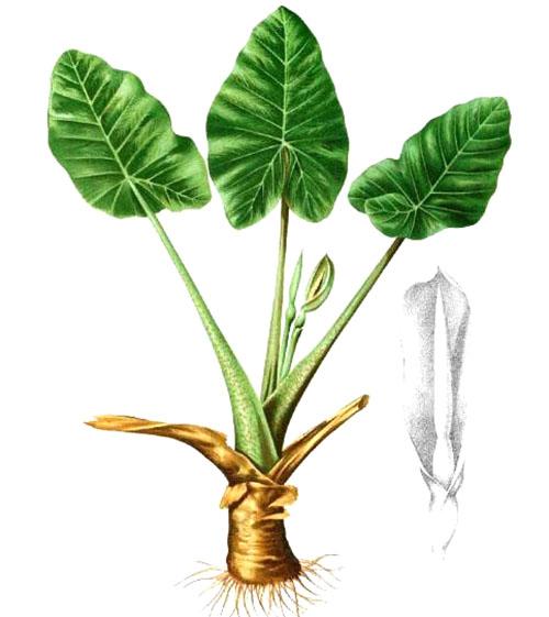 Строение растения