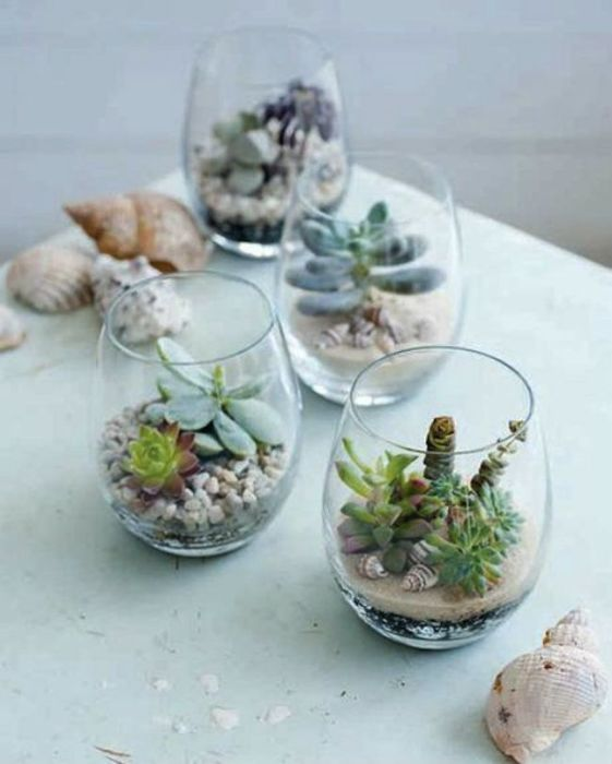 Расположив суккуленты в стеклянных стаканах можно изменять композицию чуть ли не каждый день!