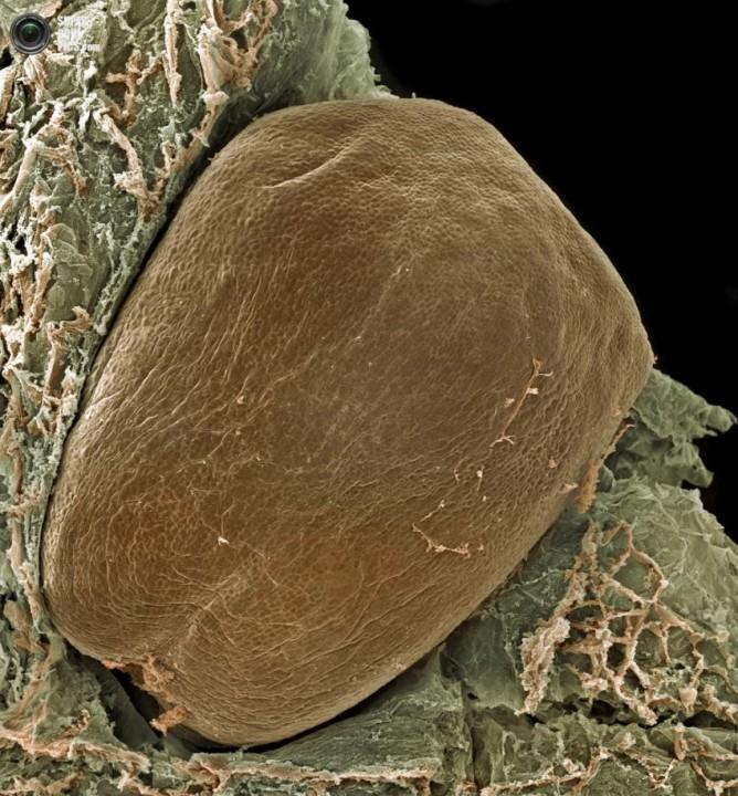 Еда под микроскопом еда, микроскоп