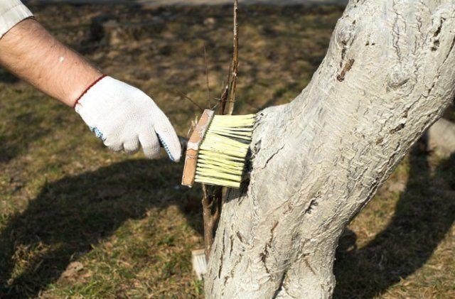 Лечение деревьев от вредителей