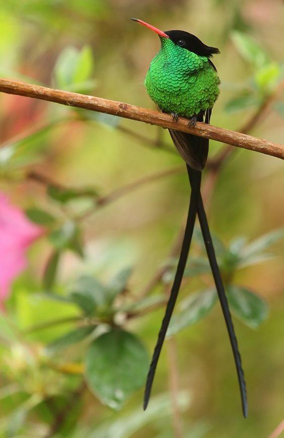 Укус пчелы или осы - для колибри смертелен интересное, колибри, природа, птицы, факты, фауна