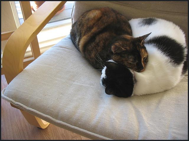 Кошачий сон любви. Фото