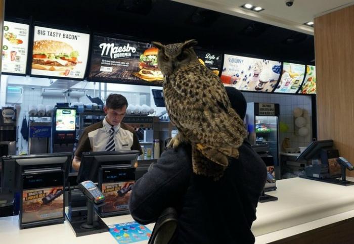Хорошо, что с совами везде можно!   Фото: я болтушка.
