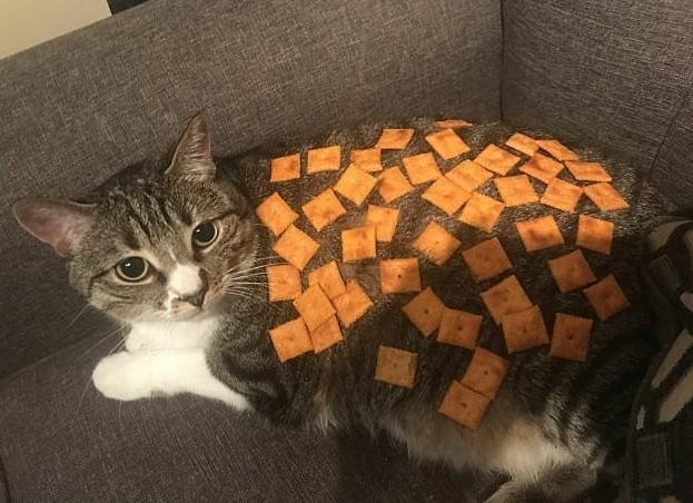 Когда хочешь измениться, одного головного убора мало. Вот этот кот, например, решил стать черепахой... животная мода, животные, животные и люди, коты, показ мод, смешно, фото, шляпки
