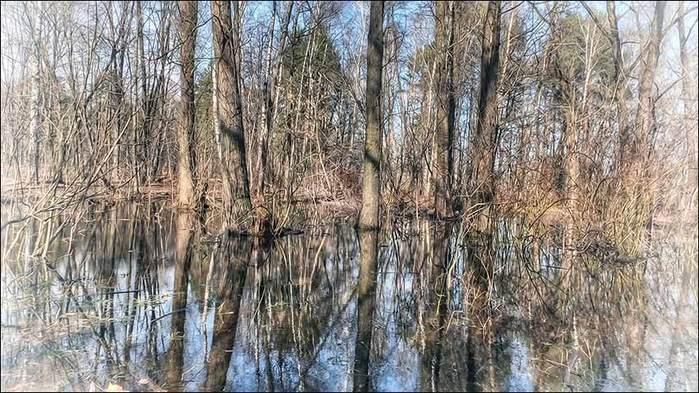 Весна в Покровском-Стрешневе/3673959_13 (700x393, 85Kb)