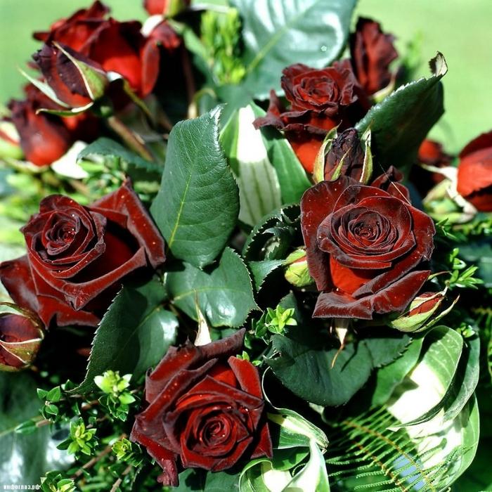 розы цвета по возрасту Сеть попали