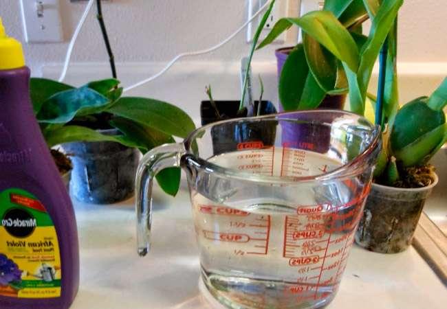 Способы подкормки орхидеи